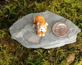 Miniature Teeny Brown Bulldog Puppy