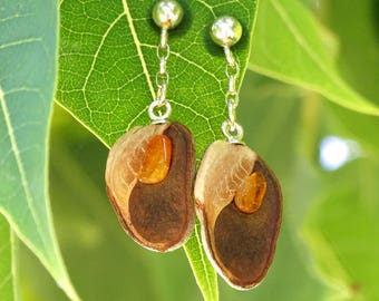 Earrings made of silver, Hakea seed pod and amber -Nature and jewelry