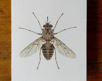 Tsetse fly greetings card
