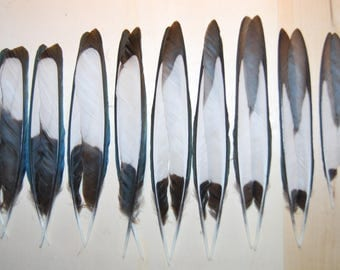 PiG2 - Set of magpie feathers / black/white/metallic-10/13cms X9paires (Pi.G2)