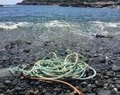 Bar Harbor leash
