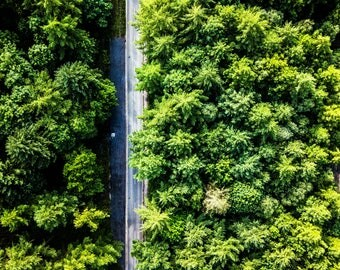 Forest Road - Trees - Drone Photography - Minimalist Trees - Landscape Print - Drone Photo - Forest Road - 0165