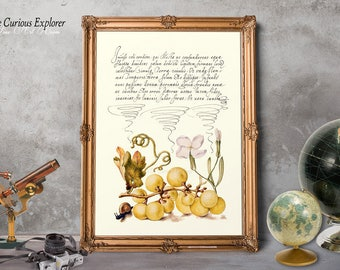 Botany Poster Gift, Gift for Father, Old Naturalist Print, Kitchen Wall Decor, Fruits Posters, Home Dorm Decor - E22_13