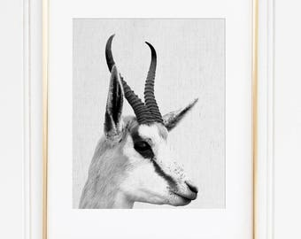 Antelope Head Print, Antelope Wall Art, Springbok Printable, African Animal, Black And White Animal, Scandinavian Modern, Antelope Decor