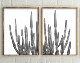 Set Of 2 Cactus Prints, Black and White Photography, Cactus Wall Art, Cactus, Black and White, Cactus Print, Wall Art, Prints, Australia