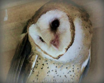 Barn Owl raptor owl wildlife bird of prey photograph photo effect picture home decor wall hanging