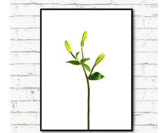 Flower buds Poster Print,Digital Prints,Printable Art,Canvas Print,                       Instant Download Printable Art,Wall Decor, Art