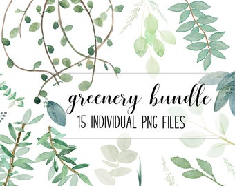 Greenery bundle of seeded eucalyptus, vines, and olive foliage Watercolor .png  | graphics | clip art | INSTANT DOWNLOAD