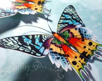 Tropical Sunset Moth 3D Acetate Butterfly Wall decoration/decal The Madagascan Chrysiridia Rhipheus.