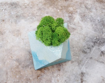 Concrete pot with stabilized moss, gifts, pots