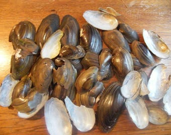 Freshwater Clam Shell Pieces- 5 ounces