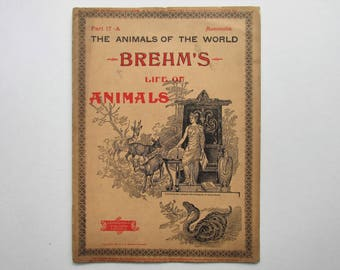 Antique 1896 Brehm's Life of Animals, Part 17-A, Illustrated, 1890's Booklet, Marquis & Company, The Beasts of Prey: The Bear Family