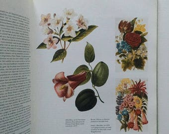 Vintage book The Victorian Flower Garden