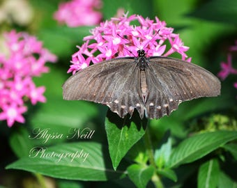 Butterfly on beautiful pink flower