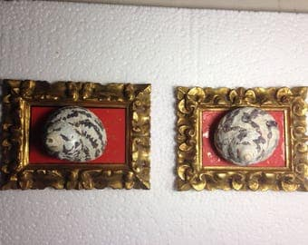 Shells-in antique qilt frames