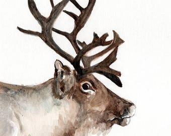 deer REINDEER elk  Fine art Print FROM original watercolor by Jennifer Redstreake