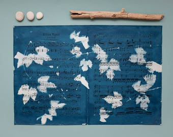 "Original cyanotype ""Wild hop"" on old, double-sided sheets of music"