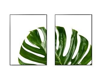 Monstera Split Leaf Print   Botanical   Green   Tropical - Leaf - Poster