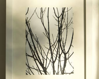 Black and White Dead Tree Print