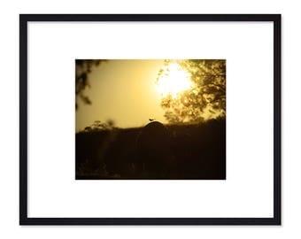 Landscape Photography - Bird Silhouette
