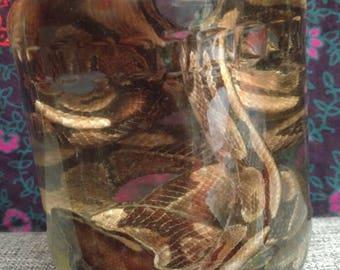Wet specimen ball pyhon snake