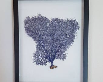 Georgeous sea fan coral shadowbox