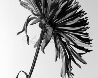 Black & White Flower Series 4 - Aluminum Print
