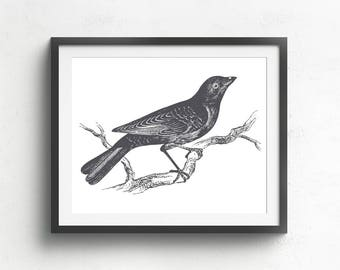 Bird Prints, Bird Art, Nature Print, Vintage Bird Art, Nature Illustration