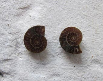 Ammonite. 2 Pcs. S0563