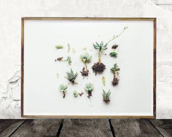 Succulent, Digital Print, Cactus, Botanical, Plant, Digital Download