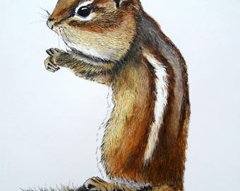 chipmunk art, chipmunk portrait, original fine art, pen and wash drawing, woodland art, woodland watercolors, squirrel art, watercolor art