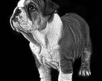 A4 English Bull Dog puppy print
