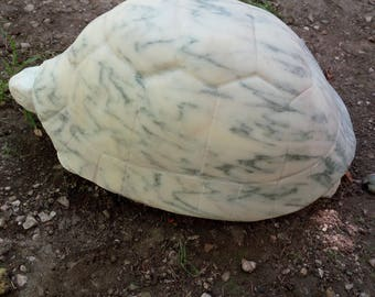 Turtle marble cream tirreno