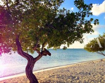 Trees on Niki Beach, Aruba