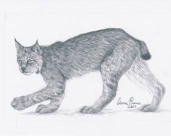 Bobcat (print)