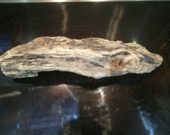 Driftwood piece - Nautical Decor - Reclaimed Wood - Art Sculpture - Vivarium - Terrarium - Arts & Crafts - Beach Decor - Chunky Wood