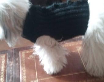 Small dog in Black wool coat