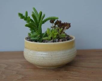 Fairy garden mini succulent planter - Ceramic pot - Indoor garden - Succulent plants - Mini succulent - Fairy garden kit - Indoor plants