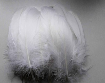 set of 5 15-20cm white feathers