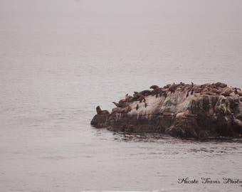 Sea-lion Rock Downloadable Photograph
