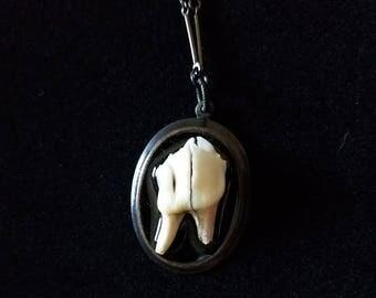 """Deer Tooth Necklace 21"""""""