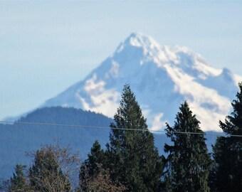 Macro of trees and Mt. Hood