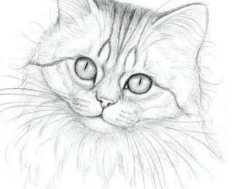 Chinchilla Persian Cat Original Graphite Portrait