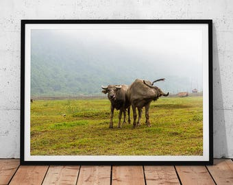 Asian Water Buffalo Photo // Vietnam Wildlife Photography Print, Nature Wall Art, Cute Animal Home Decor, Farm Landscape, Endangered Animal