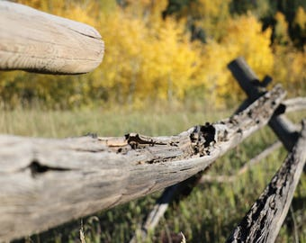 Wooden Fence in Fall Photograph