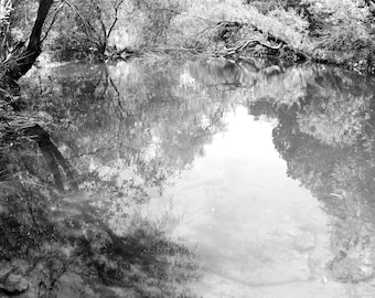 Black and White Photo of a Reflections in Pond in Walnut Creek Park  // Photography near Austin, Texas // Nature, Tree, Forest, Water, Lake