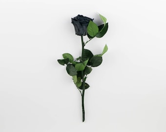 Black Long Stem Roses, Forever Roses,Real Preserved Black Rose,Eternity roses that last a year,Beauty and the beast rose,Real Black Roses