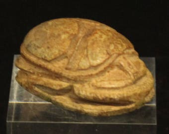 Ancient Egypt Bug