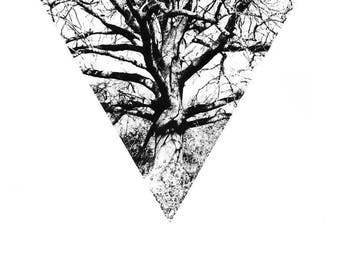 Magic and mythology, Fine Art Giclée Photographic Print, Limited Edition, Oak Tree, folklore, witch tree.