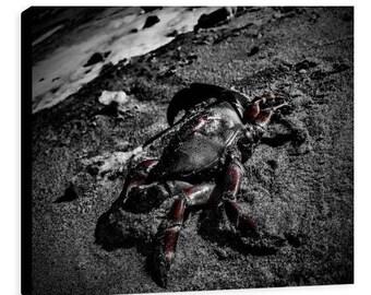 Red Crab Canvas - Jessica Mason Photography